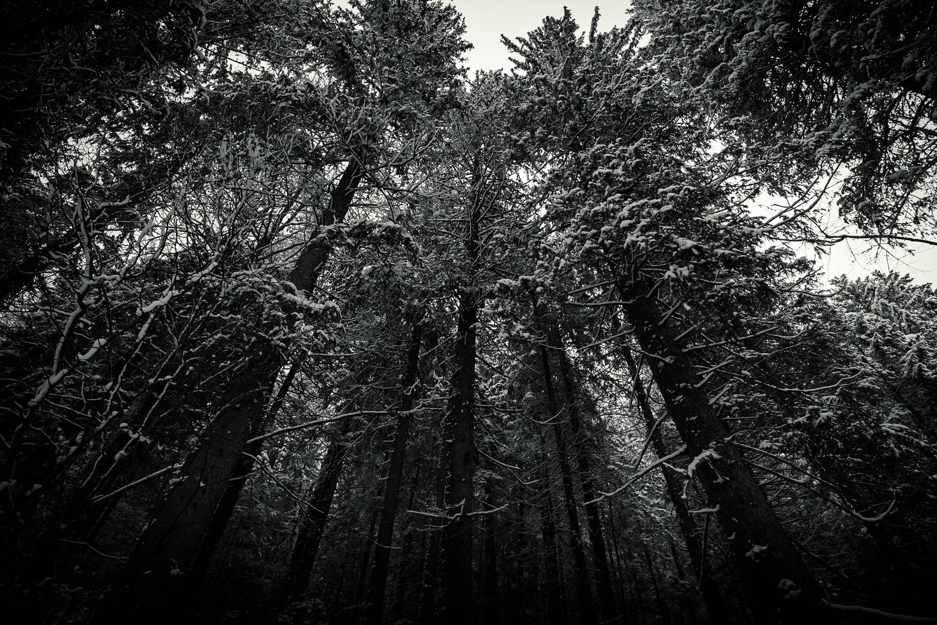 Treeview am Eibsee im Winter