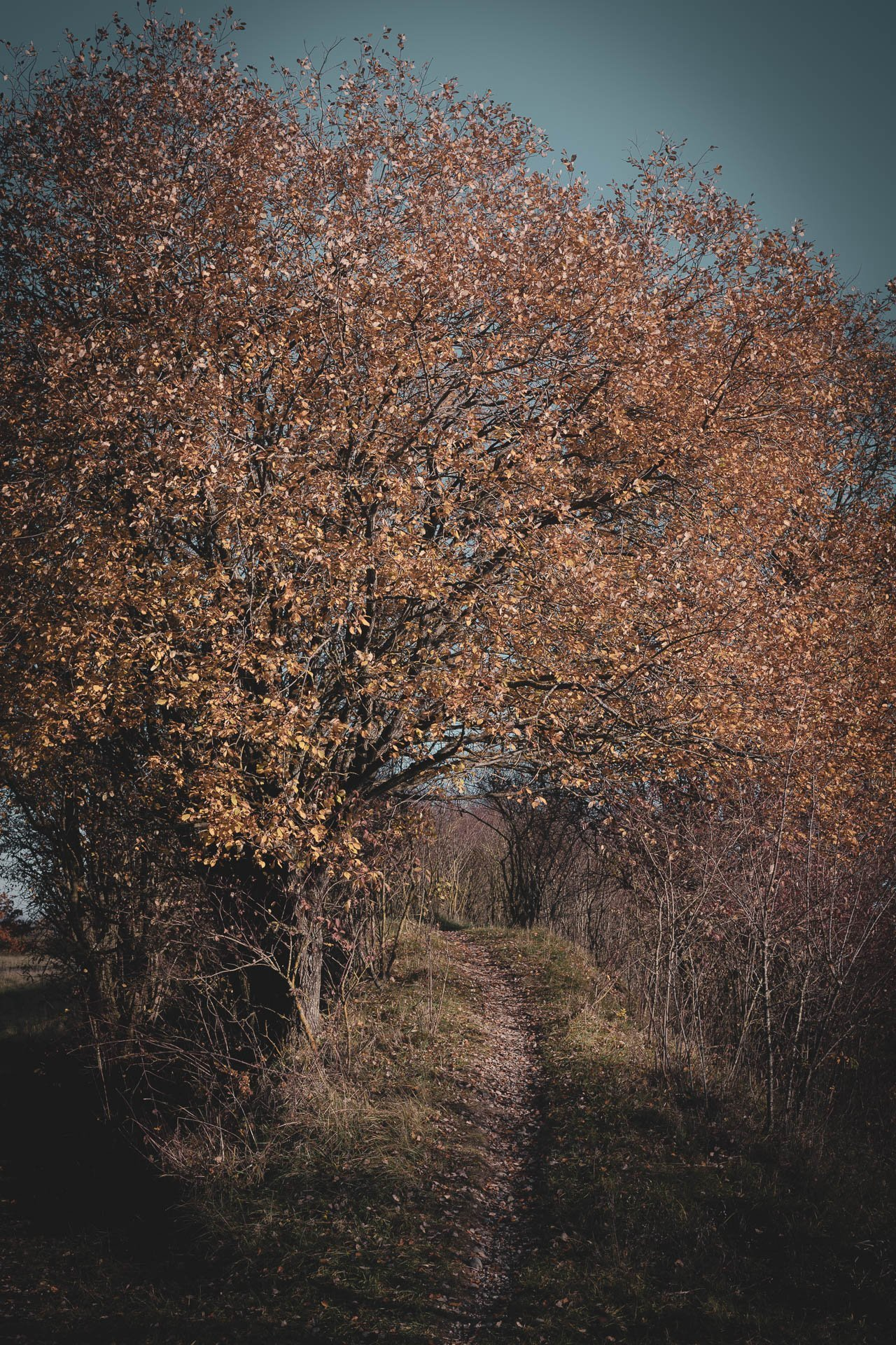 Herbst mystische Pfade