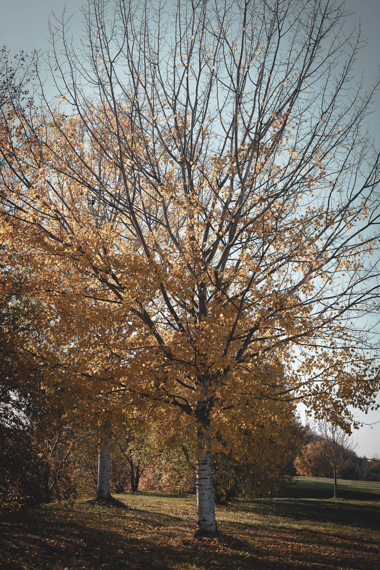 Herbstliche Eindrücke