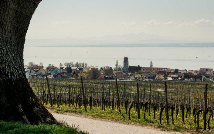 Blick auf Hagnau am Bodensee