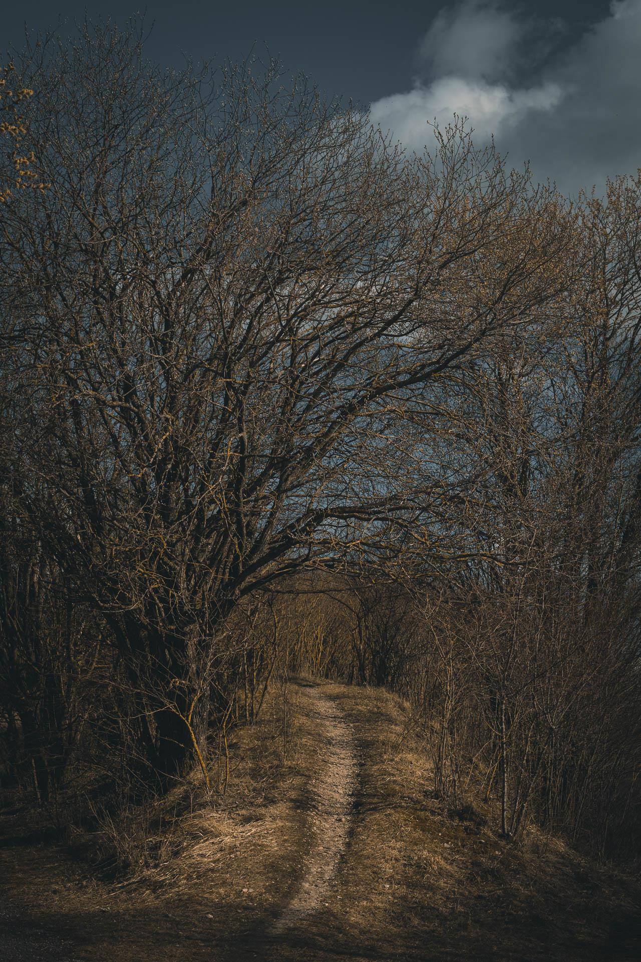 sturmverhangener Weg